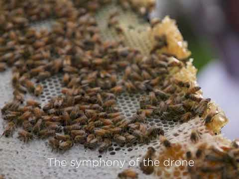 The beauty of beekeeping in New Zealand
