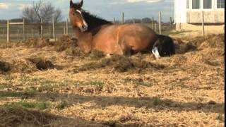 Sassafras - A Baby Horse Is Born