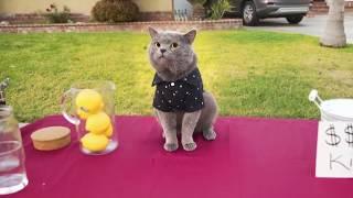 Приколы с котами с озвучкой от Domi Show   Смешные коты и кошки 2018