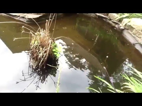 Fishing In MINI Goldfish Pond!!!!