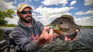 Panfish 101 — Angling Edge TV