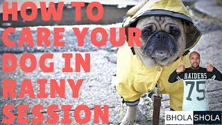 Pet Care - How To Care Your Dog In Rainy Session - Bhola Shola