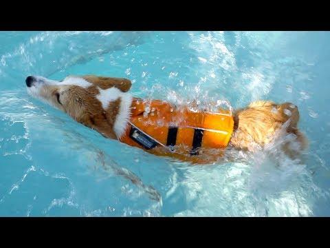 수영 천재 우주 🦊 Ujoo was born to be a swimmer!