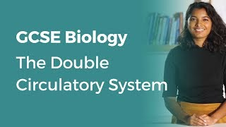 The Double Circulatory System | 9-1 GCSE Biology | OCR, AQA, Edexcel