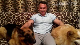 Александр Гвоздь: тренировка спины или повелитель собак