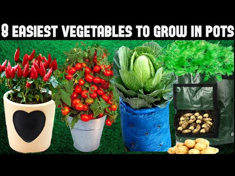 , title : 'Top 8 Easy To Grow Vegetables For Beginners|SEED TO HARVEST'