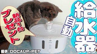 【プレゼント企画】センサーで反応する犬猫用自動給水器レビュー