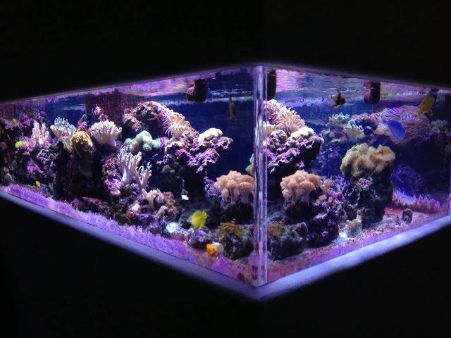 Video of my 500 gallon reef tank. 1/1/2016