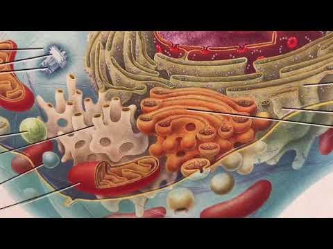 Tutoriel vidéo de massage de la prostate Anal