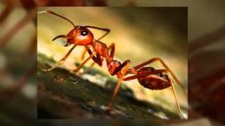 Pest Exterminator Poway CA Pest Extermination Service