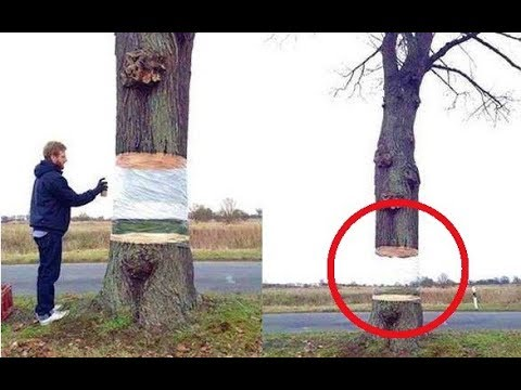23 Amazing Street Art Magic