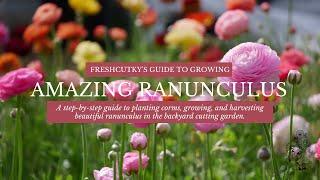 How to Grow AMAZING Ranunculus - How to Fall Plant Ranunculus Bulbs - @Flower Hill Farm Collab!