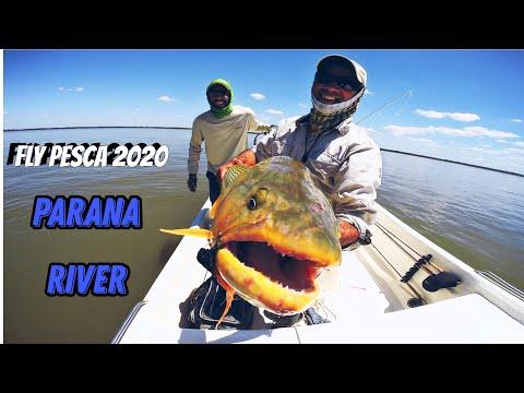 Paraná Fly Pesca 2020