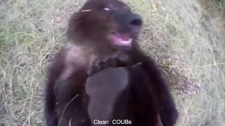 Прикольные видео   COUBs funny videos #17