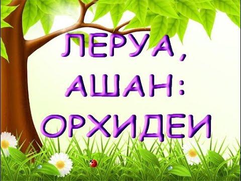 """ЛЕРУА,Ашан:ОТЛИЧНЫЙ завоз ОРХИДЕЙ,15.05.20,Самара,ТЦ""""Космопорт""""."""