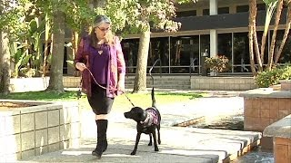 Bakersfield woman uses service dog to help meter blood sugar levels