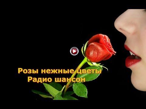 Розы нежные цветы - Радио шансон