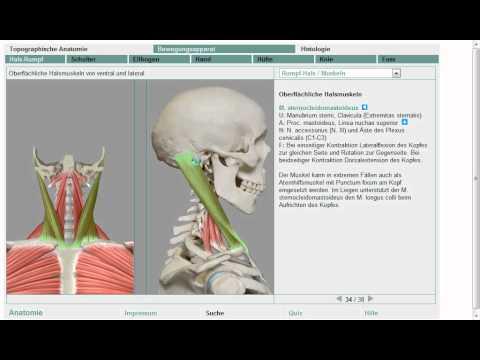 Die Salbe bei die Schulterschmerzen und dem Hals links