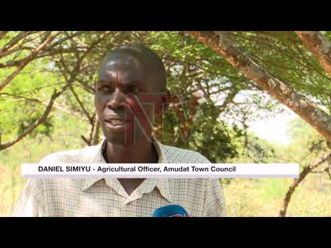 Amudat residents adapt to settled pastoralism