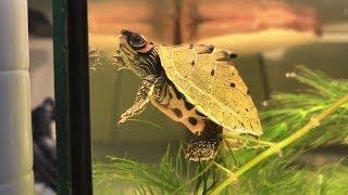 27種最奇特的烏龜種類