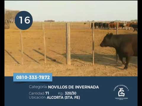 Lote Novillitos - Alcorta Sta Fe