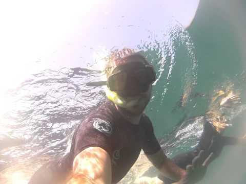 Whale shark II – Holbox island