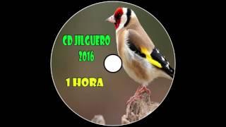 CD Jilguero / Educación Noveles / 2016 / 1 Hora