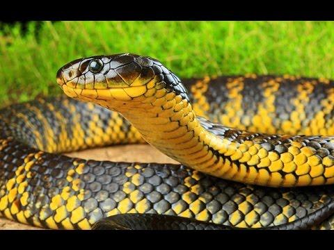 Народные приметы про змей