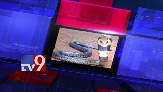 King Cobra terror in Srikakulam - TV9