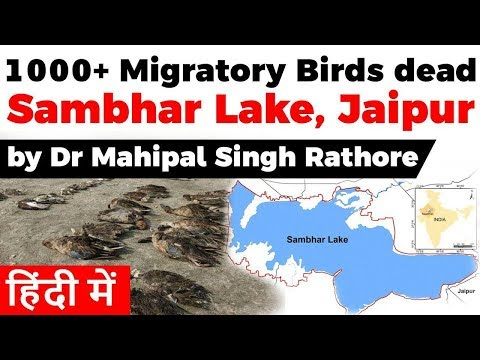 Sambhar Lake Rajasthan - Over 1000 migratory birds found dead, Current Affairs 2019 #UPSC2020 #IAS