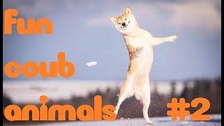 fun coub animals #2 Смешные ролики с животными ноябрь 2018