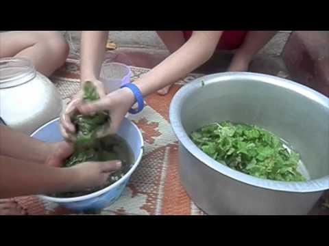 Video Mint Sirup