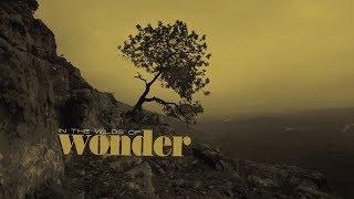 SONNY LANDRETH - The wilds of wonder