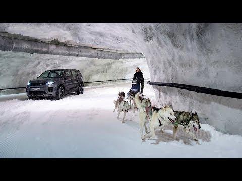 Discovery Sport – Horsepower vs Dog Power