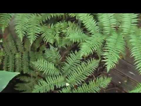 Exotic Gardening UK Yorkshire Kris Episode 46