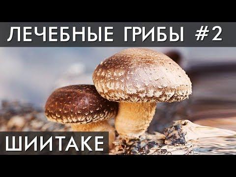 ГРИБ ШИИТАКЕ. Уникальные лечебные свойства высших грибов. Фролов Ю.А.