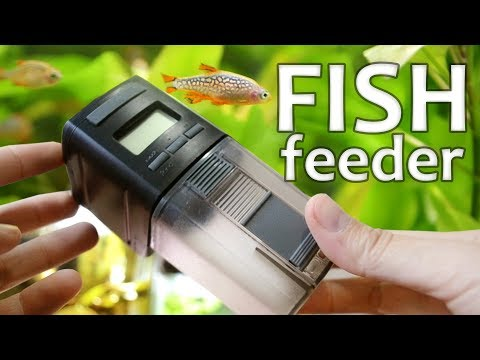 You Should Consider An Automated Fish Feeder | Perfect for Vacation
