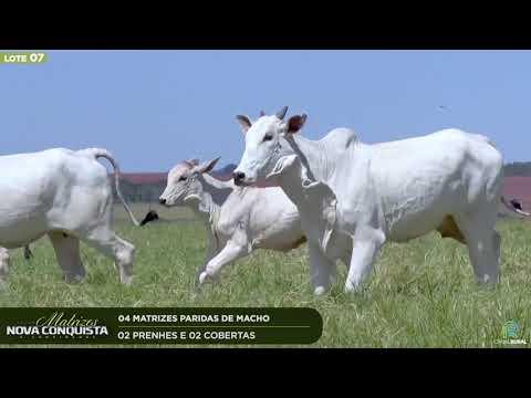 04 MATRIZES PARIDAS - 02 PRENHES E 02 COBERTAS