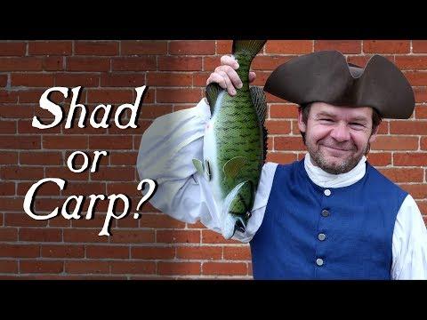 The Fish Controversy – Q&A
