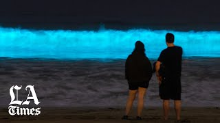 Why Californias Beaches Are Glowing With Bioluminescence