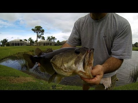 BASS FISHING-GIANT Florida Golf Course Pond Bass