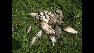 Ловля рыбы на палочку от чупа чупс