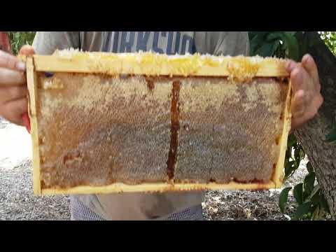 отбираю мёд с ловушки на 14 рам 2017 год