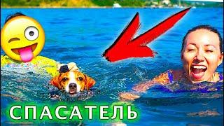 Собака Джина СПАСАТЕЛЬ ПЛАВАЕТ В ЖИЛЕТЕ ПЕРВЫЙ РАЗ Яхта Элли Ди | Elli Di Pets