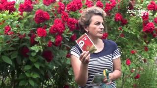 Защита растений от насекомых и вредителей видео