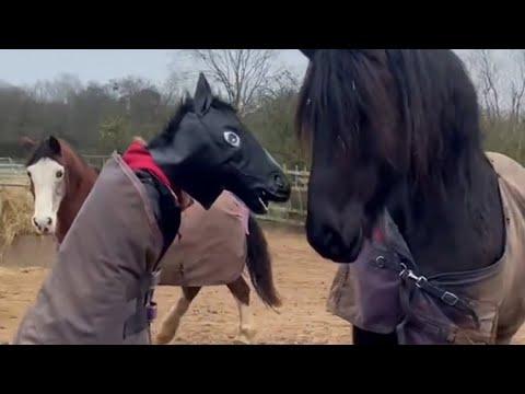 הסוסים לא זיהו את הסוס המחופש  • צפו