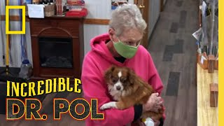 Treating Two Dogs with Leg Injuries | The Incredible Dr. Pol
