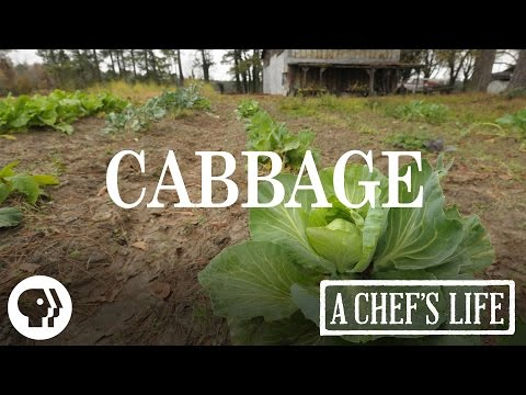 Cabbage   A Chef's Life   PBS Food