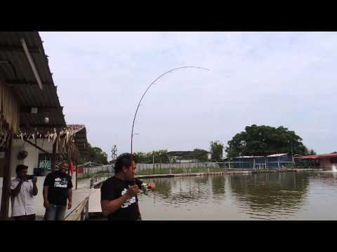 LS fishing pond fight 118kg naga