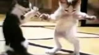 Танцующий котенок